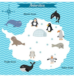 map of antarctica continent with different animals vector image vector image