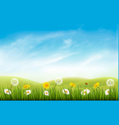 Nature background with grass and flowers and vector