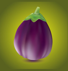 eggplant or aubergine vegetable isolated on white vector image vector image
