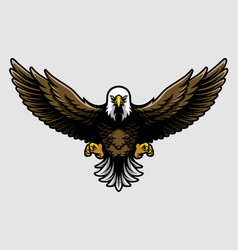 American bald eagle with open wings and claws in vector