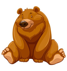 Fat brown bear vector