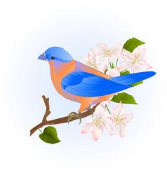 Small songbirdon bluebird thrush on a branch vector