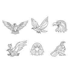 eagle line sign and symbol vector image