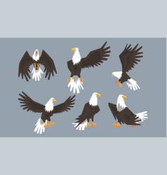 bald eagle collection pride power predatory bird vector image