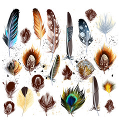 Big set of detailed bird feathers vector