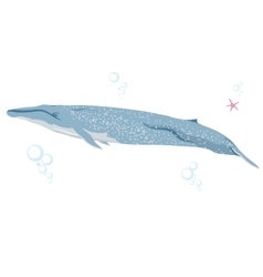 Blue whale realistic flat vector