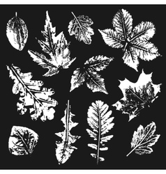 Collection of leaves imprints vector