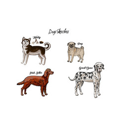 Dogs sketches set dogs of different breeds vector