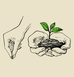 plant in hands grows vector image