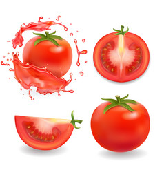 Tomatoes isolated realistic vector