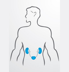 Kidneys and human body - vector image vector image