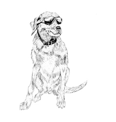 dog with eyeglasses vector image