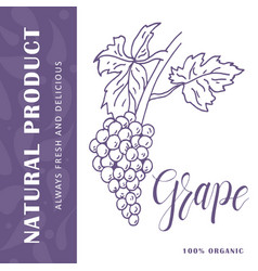 Food design with fruit hand drawn sketch of grape vector