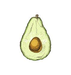 Hand drawn avocado half vector