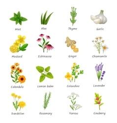 Medicinal herbs plants flat icons set vector