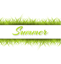 summer background with grass a vector image