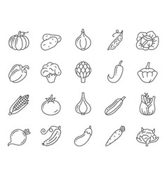 vegetable food simple black line icons set vector image