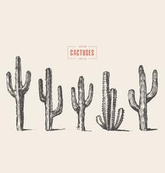 set cactus hand drawn sketch vector image vector image