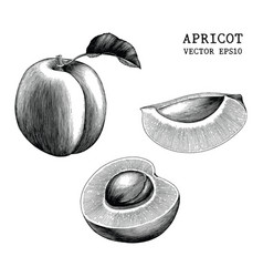 Apricot collection hand draw vintage clip art vector