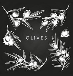 hand drawn olive branches on chalkboard vector image