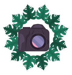 photography camera frame tropical leaves summer vector image