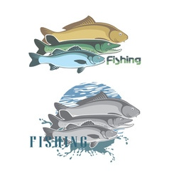pike perch vector image