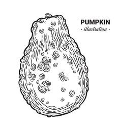 Decorative pumpkin fresh food hand drawn vector