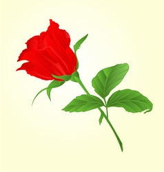 Rosebud red rose twig with leaves vector image
