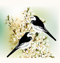 couple black and white birds sit on branch vector image