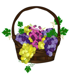 grapes basket vector image