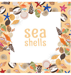 sea shells background with square frame vector image