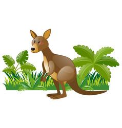 Wild kangaroo in forest vector