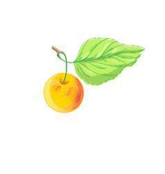 A bright apple vector