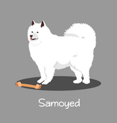 an depicting samoyed dog cartoon vector image