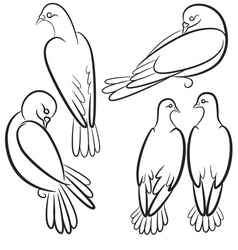 Black and white contours of four pigeons that sit vector image