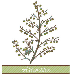 Colored artemisia plant in hand drawn style vector