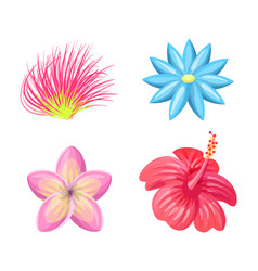 plumeria flowers tropic set vector image