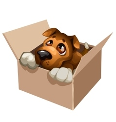 Sad stray dog cute in a cardboard box vector image