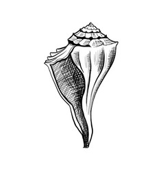 seashell conch hand drawn vector image
