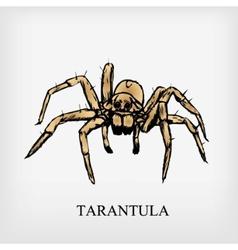 Tarantula spider vector