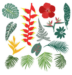 tropical jungle leaves and flowers collection vector image