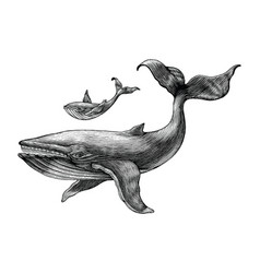 big whale and little whale hand drawing vintage vector image