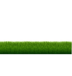 green grass border with isolated white background vector image