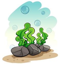 Seaweeds under the sea vector