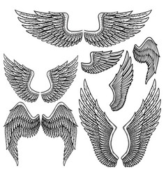 set monochrome bird wings different shape in vector image