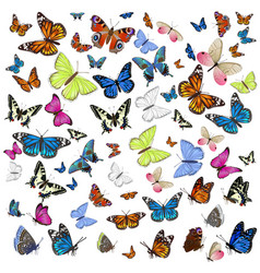 a collection different butterflies flying and vector image