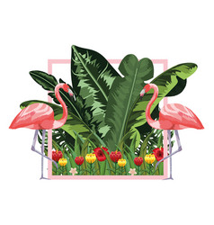 exotic and tropical bird frame vector image