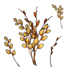 pussy willow branches on a vector image