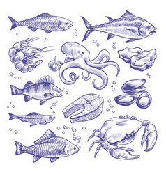 seafoods hand drawn sea fishes oysters mussels vector image