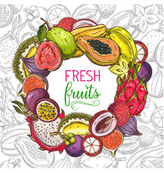 tropical fruits banner exotic fruits sketch vector image